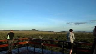 セレンゲティ国立公園の朝