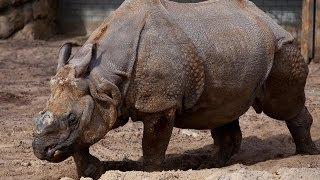 Nesli Tükenmekte olan 10 Hayvan Türü
