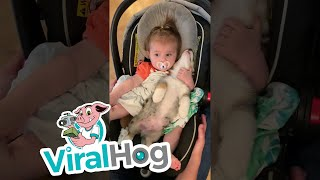 Baby and Puppy Become Good Friends || ViralHog