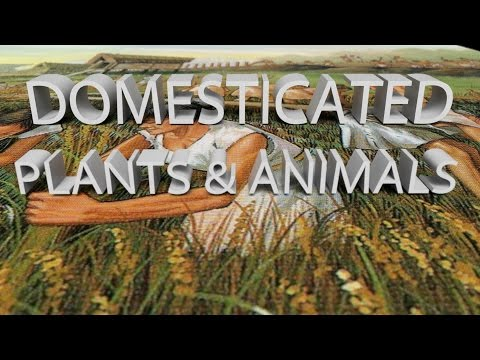 HIST 1121 Lesson 9 - Domesticated Plants & Animals