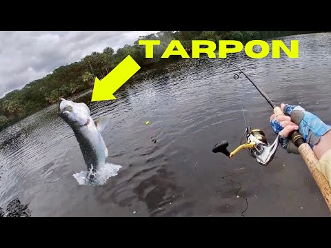 Super RARE FISH In Hidden SALTWATER POND! (Tarpon And Snook Fishing In North Florida)