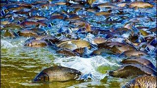 ТОННЫ РЫБЫ ПЛЫВУТ ПО ДОРОГЕ рыбалка 2021