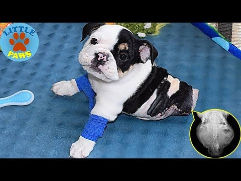 Half The Dog, Twice The Heart: Rescued Puppy Born Is One Special Dog