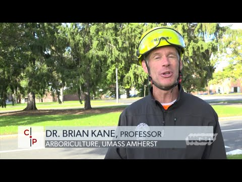Urban Forestry Pt. 1: Education | Connecting Point | Nov. 5, 2018 Mp3