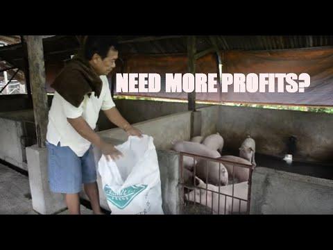Premium Feeds