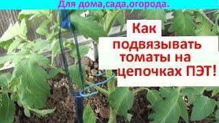 Как подвязывать томаты к цепочке ПЭТ!!!