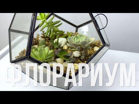Как сделать флорариум с суккулентами | TURAGINA DECOR | Florarium succulents