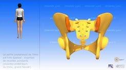 Le bassin: os coxal (os iliaque), sacrum, coccyx; bassin féminin et bassin masculin