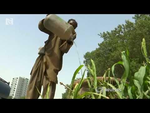 Pakistan heatwave kills 65 people in Karachi