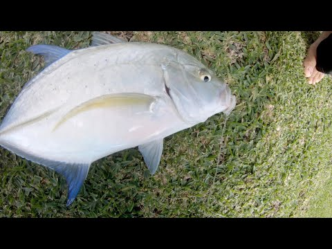 Shoreline Fishing - Fishing For Fun - Dunking And Whipping For Papio - Hawaii
