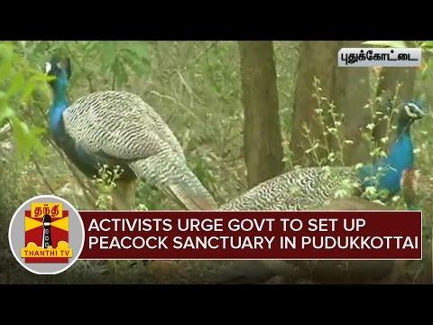 Social Activists urge govt to set up Peacock Sanctuary in Pudukkottai - Thanthi TV