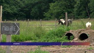Yvelines | Une journée pour la biodiversité à la ferme des Clos de Bonnelles