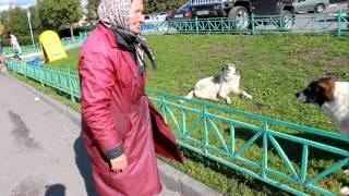 Собака ругается с бабушкой