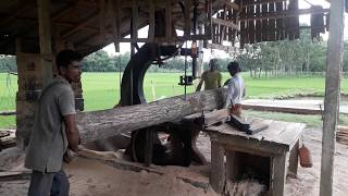 Huge and Big Size Wood Cutting at Saw Mill in Bangladesh Village/ BD Village Saw Mill Wood Cutting