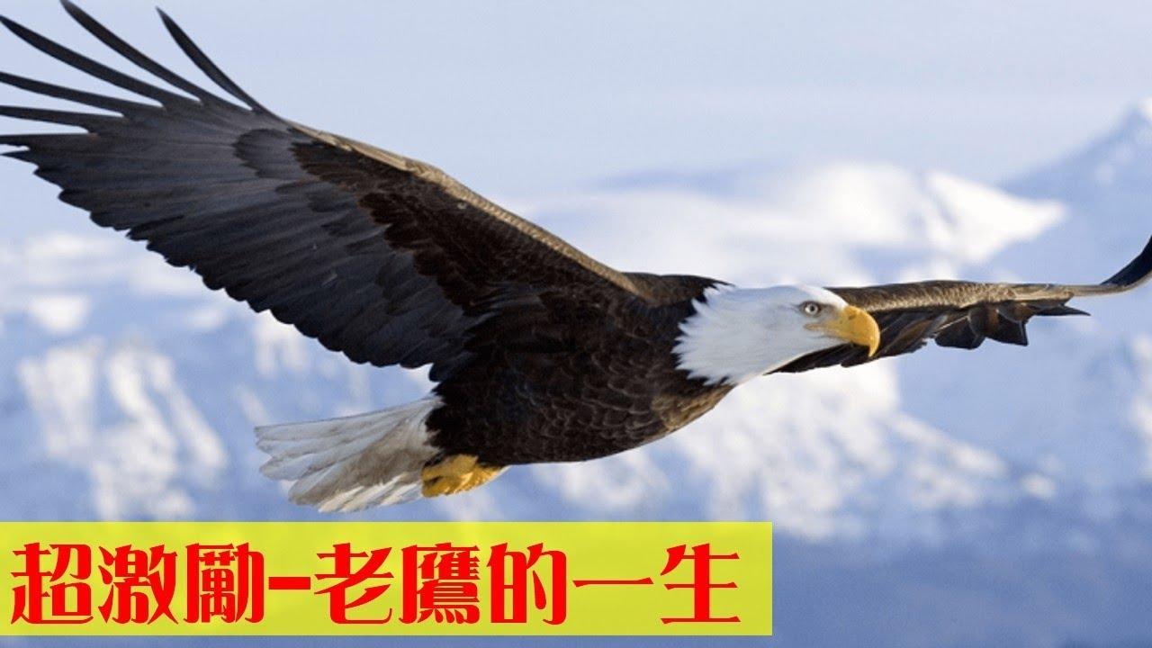 簡報技巧/激勵小故事~老鷹的一生實在超激勵人的【Presentation Tips|Inspiration Story:The eagle's life】高效簡報技巧 ...