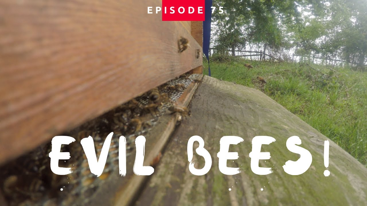 My First Bees And They Are EVIL!!!!!!!