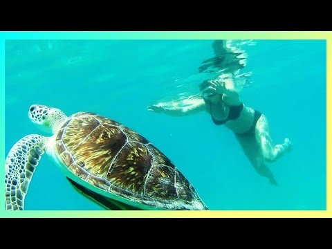 HONEYMOON BEACH - SNORKELING WITH TURTLES  -  ST. THOMAS  WATER ISLAND