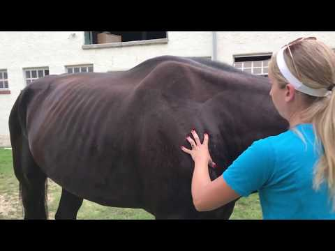 Horse donated to the Philadelphia Police Department mistreated