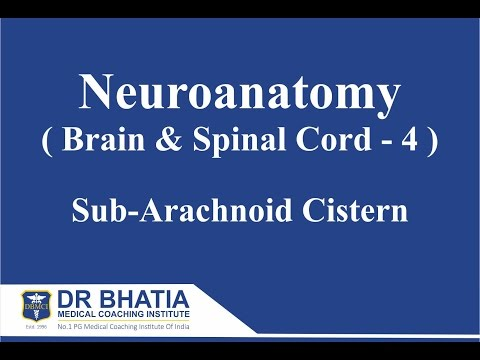 Neuroanatomy (Brain & Spinal Cord - 4)  Sub Arachnoid Cisterns