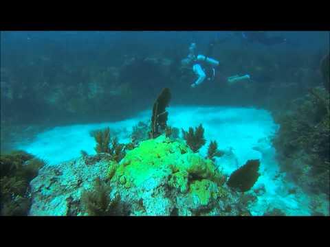Florida Keys-A scuba diving trip to Molasses Reef. FloridaKeysXperienceImage