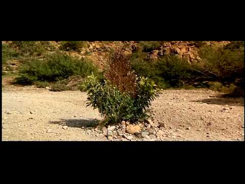 Three Amigos Best Scenes Part 2