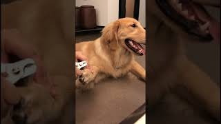 Look at these cute and funny puppies dogs 3179