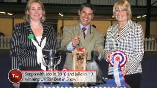 Highlights Of Uk Toy Dog Show & British Breed Features
