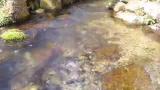 蒜山 塩釜の冷泉