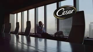 Музыка из рекламы Cesar - Ответная любовь (2016)
