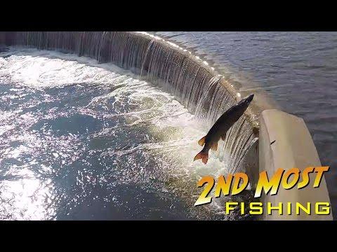 Annual Jumping Of The Muskies At Wingra Creek Dam