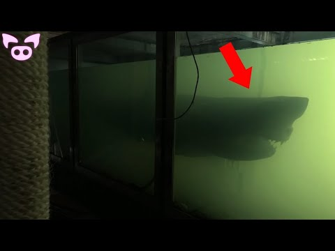 The Creepiest Discoveries Made by YouTubers