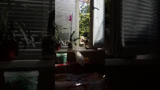Кузя и котенок