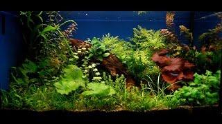 #Корм для #аквариумных #рыб. #Купить или #приготовить #самому.(, 2016-11-03T06:30:00.000Z)