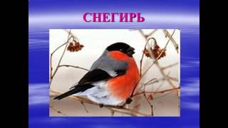 жизнь птиц презентация 1 класс