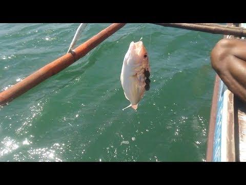 First time nmin mamingwit ng Bisugo.Fishing method.