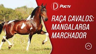 Programa Vida no Campo 07/04/19 - Raça Cavalos: Mangalarga Marchador