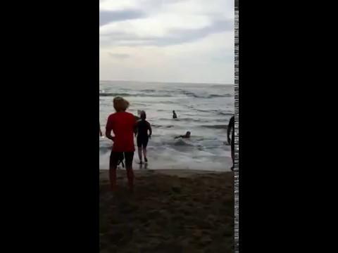 Esercitazioni federazione italiana nuoto sezione cinofila