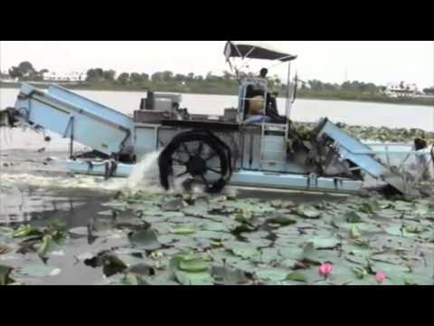Cleantec Infra Clearing Of Lotus Mats In Gep Sagar Lake Dungarpur