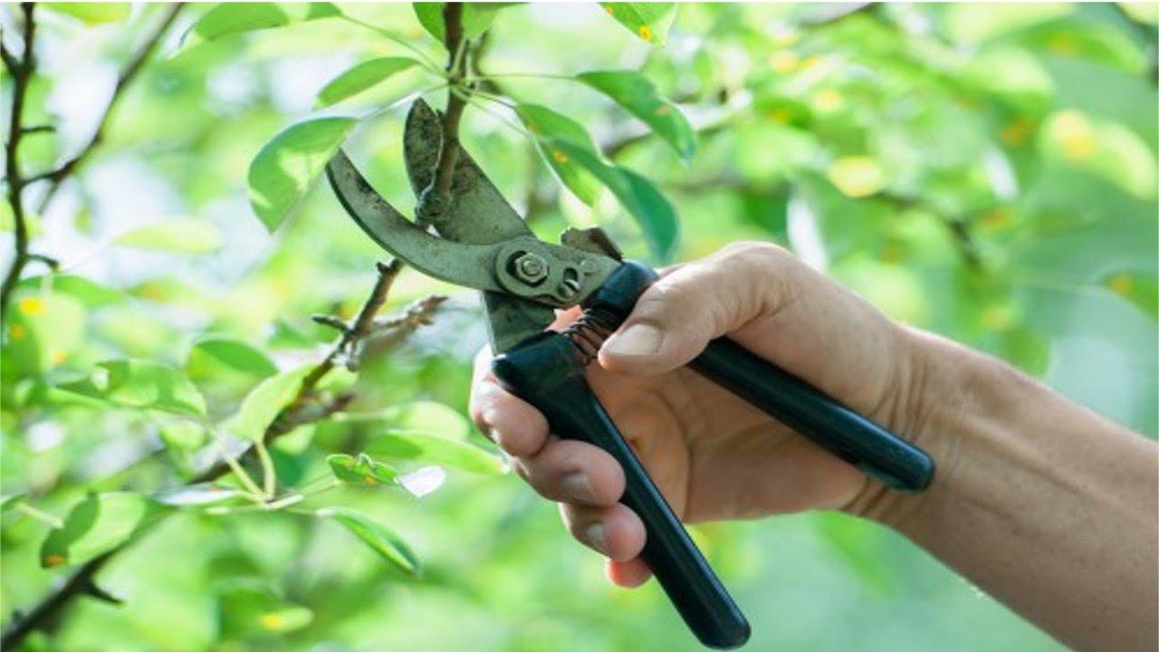 Treinamento de jardineiro poda de rvores cursos cpt - Poda de hortensias epoca ...