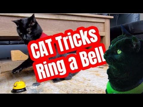 CAT Tricks: Ring a Bell attempt #1