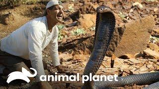 !De frente con la cobra que mato a Cleopatra! Wild Frank en Africa Animal Planet
