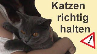 Katzen richtig hochheben, halten und absetzen + No Go's !