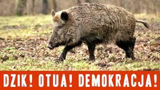 Komunikat Ministerstwa Prawdy nr 714: Dzik! Otua! Demokracja!
