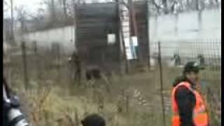 Dmitry Fatin.собаки Собаки-телохранители в хорсе,стрельба