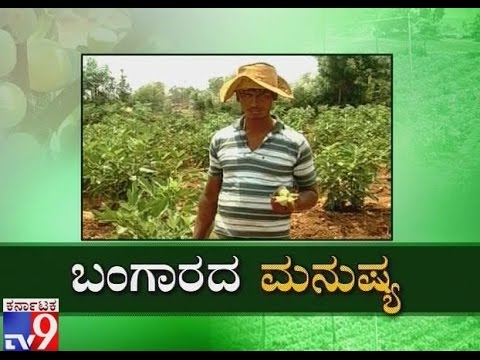 Bangarada Manushya: Farmer Kumar Naik Cultivated Anjura Fruit by Adopting Modern Thoughts