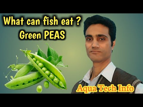 #223. What Can Fish Eat? - Green PEAS
