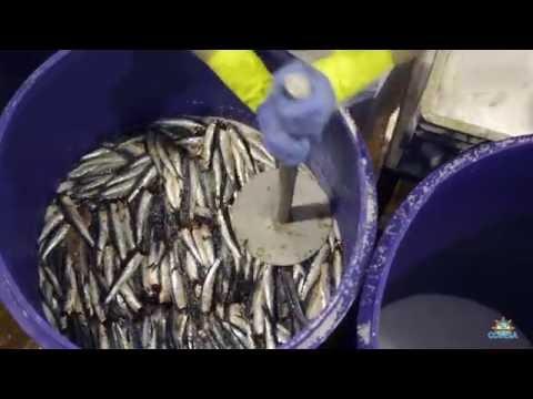 Jaime Bayly entrevista a Alan garcia (Completo) de YouTube · Duración:  57 minutos 17 segundos  · Más de 655.000 vistas · cargado el 13.08.2013 · cargado por PeruCultural