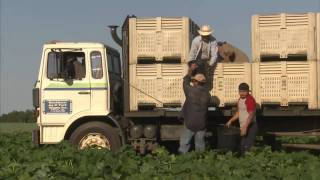 Georgia Produce Farm: America's Heartland