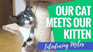 Introducing our Kitten to our Adult Cat | Bringing Miles Home