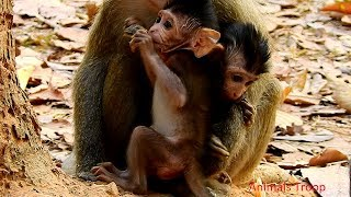 Two adorable newborn monkeys, Newborn monkey are playing together